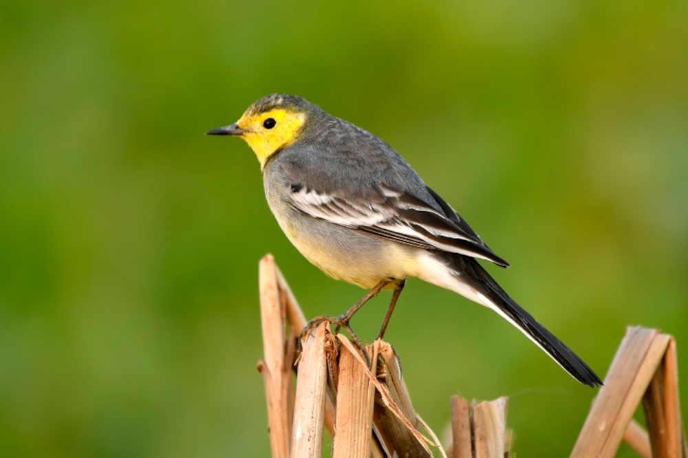 Manglajodi Birding