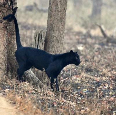 Kabini Jungle Safari Bookings | Kabini - Nagarhole National Park