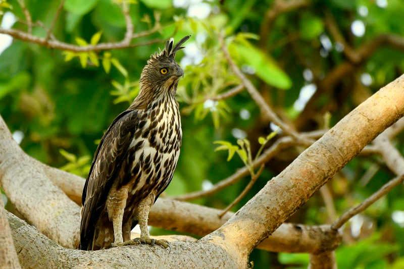 Satpura Jungle Safari