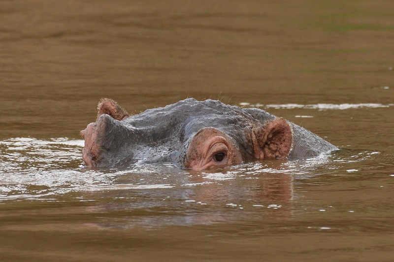 Kenya Safari Packages