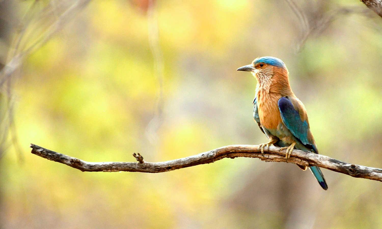 GoBirding at Ganeshgudi