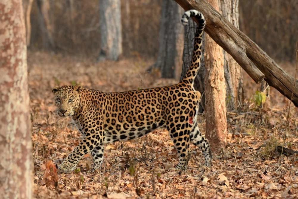 Kabini - Nagarhole National Park