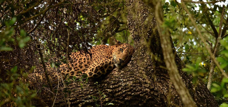 Wildlife at Srilanka