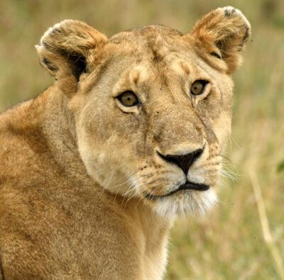 African Safaris - Jungle Trail