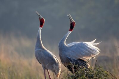 Bharatpur Bird Sancutary
