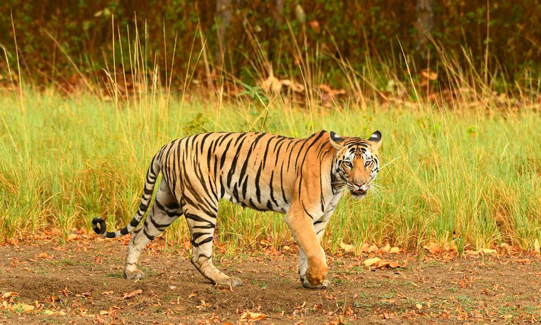 Kanha Jungle Safari