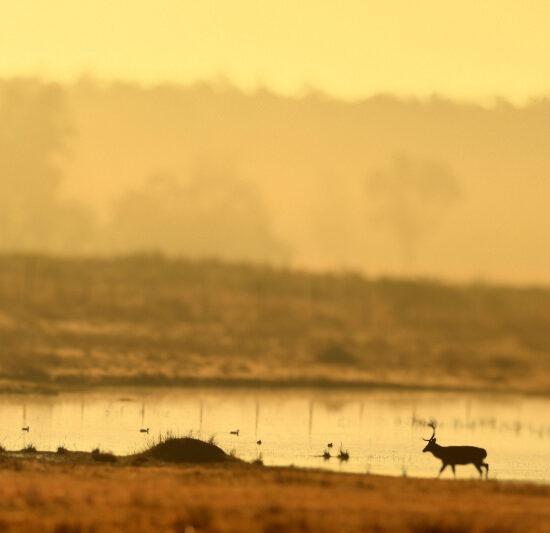 Morning at Kanha National Park-1