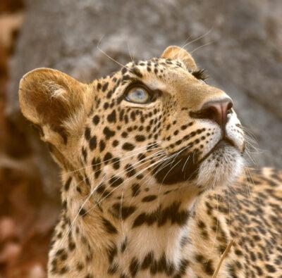 Wild SriLanka
